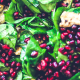 Anjula Devi | Authentic Indian Recipes | Healthy Indian Cuisine